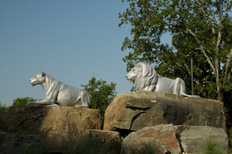"""Lion Pride"" by Darrell Davis and the National Sculptors' Guild  is installed at the roundabout as you enter the Little Rock Zoo. NSG Director John Kinkade made multiple trips to Little Rock to pick out the natural stone that is strategically placed to create the levels needed to match the artist's initial composition. The cast aluminum really sets off against the warm colors in the stone. And the strong glance of the lions is intense. We love how it turned out and hope you can make a trip to see in person. #PublicArt NSG-505"